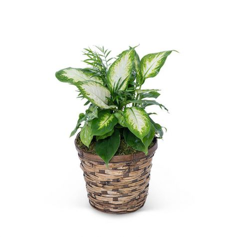 Mixed Planter in Basket